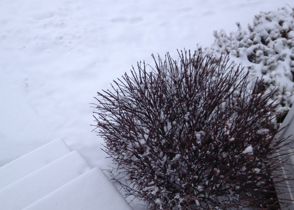 This is actually a picture from last year's snow...I didn't get a photo while it was still light outside!